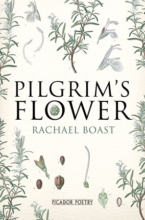 pilgrims-flower-978144724217801